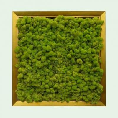 Зелени картини