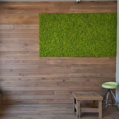 Зелени стени от мъх